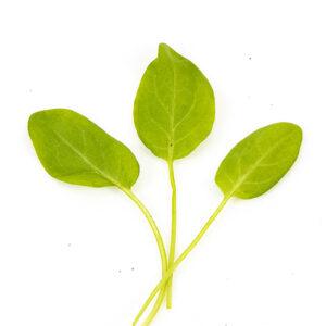 Grøn havesyre
